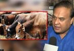 Assam Cabinet approves cattle protection bill